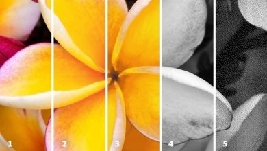 Photo of Explaining Color Modes in Photoshop